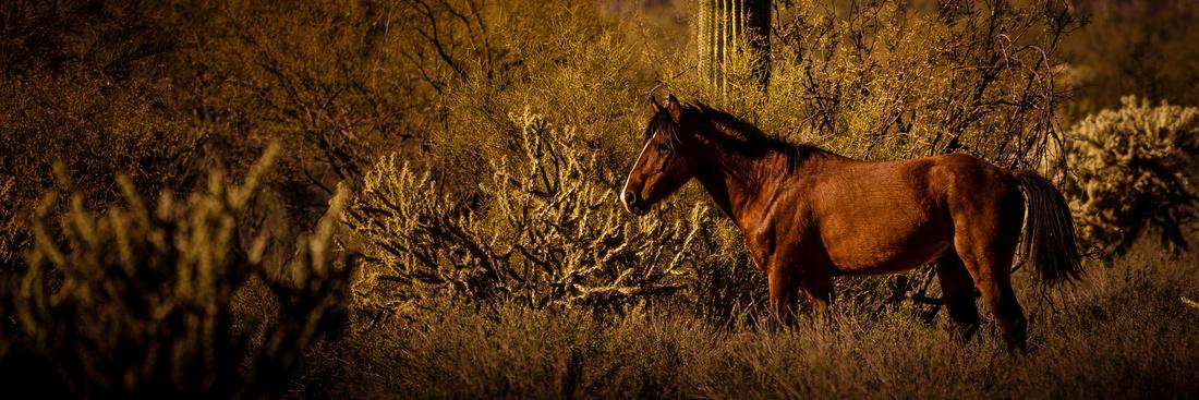 03-Wild horses-7