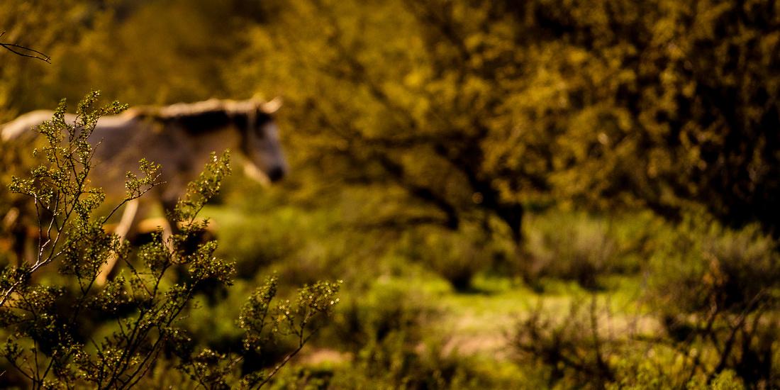 1-Wild horses-3