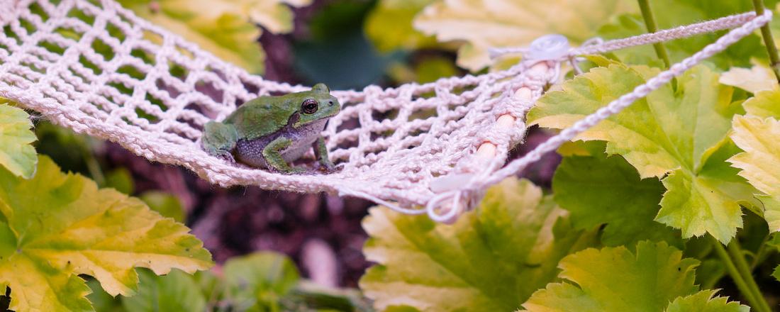 Tree-frog-130