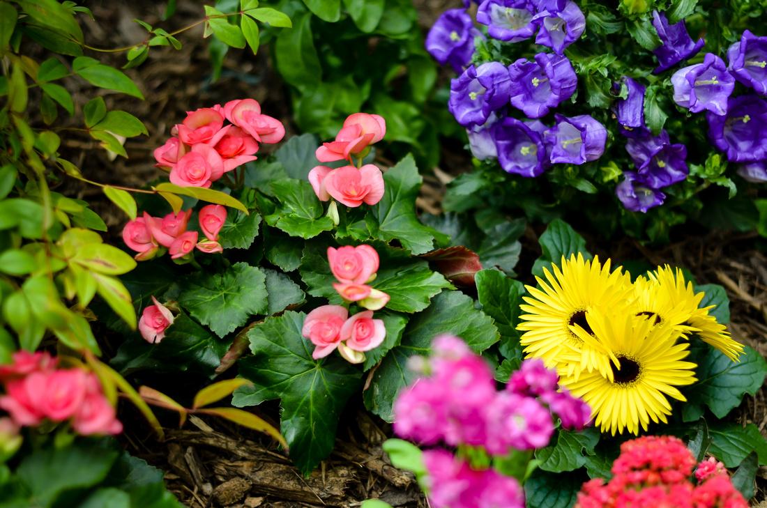 Olbrich spring 2014-37