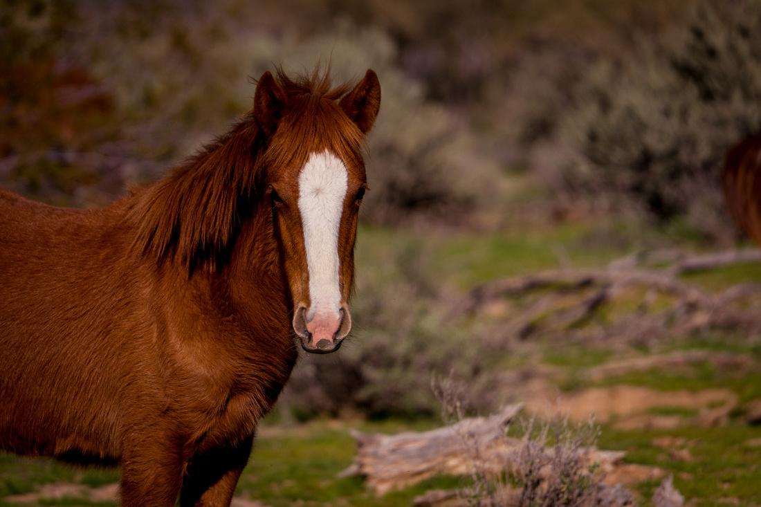 08-Wild horses-22