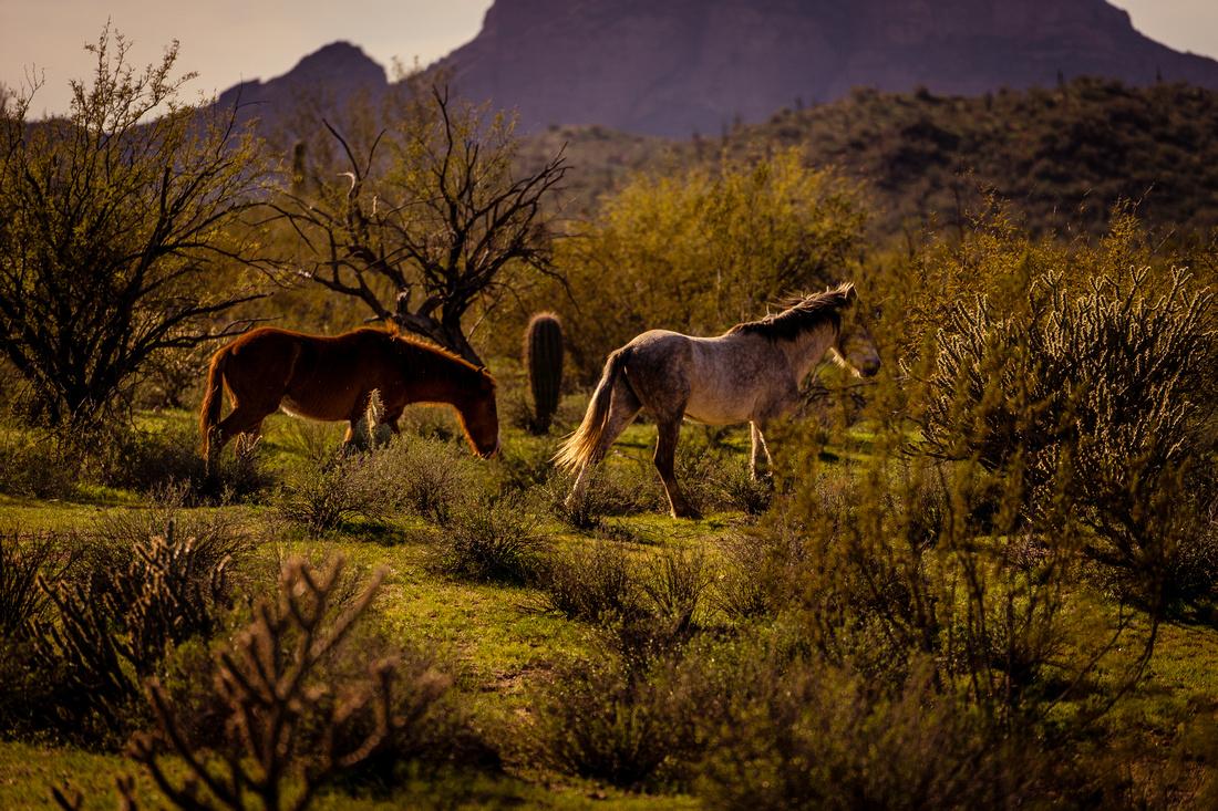 01-Wild horses-6