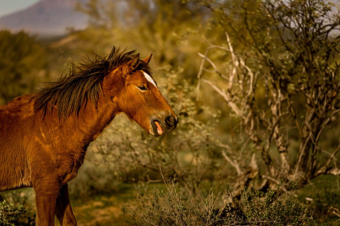 13-Wild horses-39